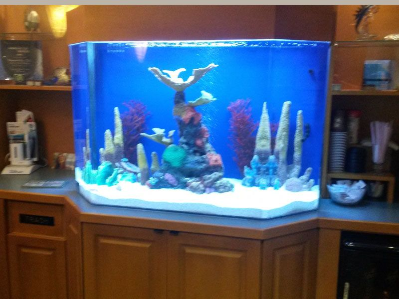 Custom Aquarium Services