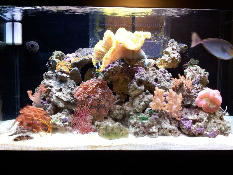 Live Reef Services